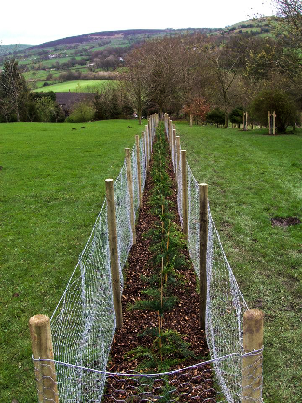 Hedge Planting - CMS Tree Services