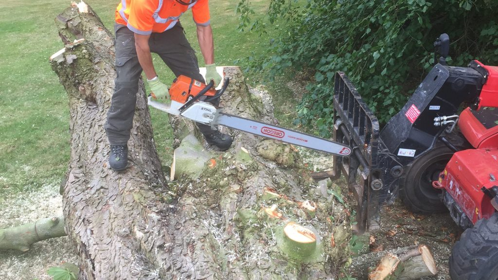 cms-tree-services-chain-saw-tree-trunk
