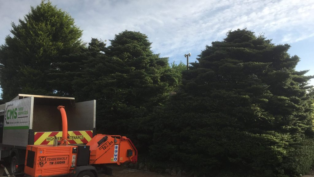 cms-tree-services-clearance-removal-higham