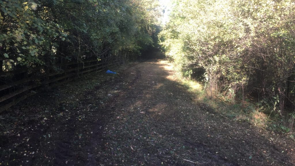 cms-tree-services-commerical-after-pathway-cleared
