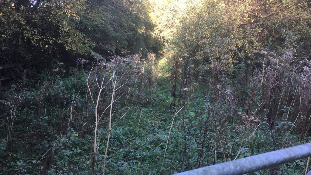 cms-tree-services-commerical-clitheroe-opening-footpath