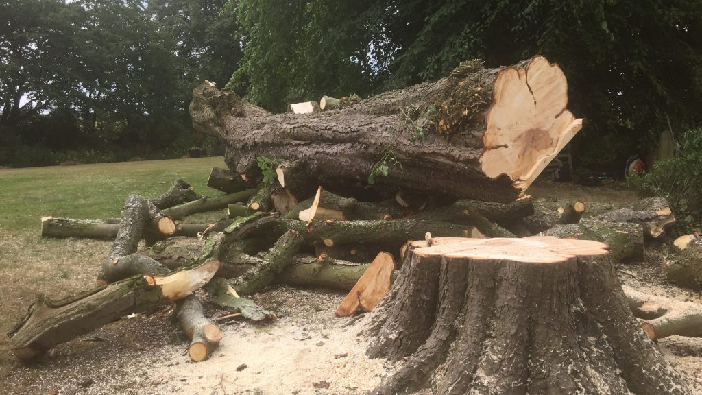 cms-tree-services-cut-down-horse-chestnut