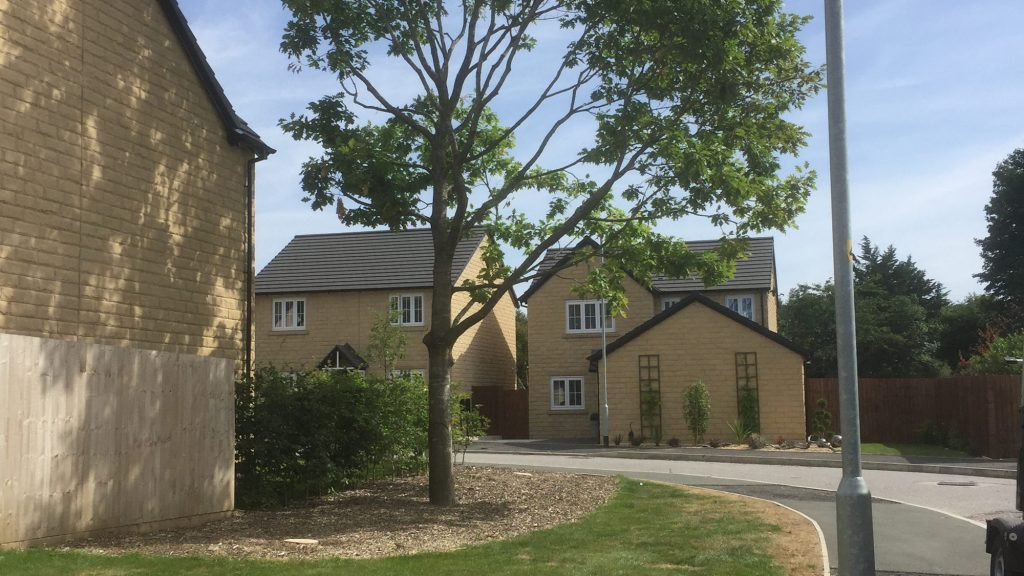 cms-tree-services-gisburn-dead-oak-removals