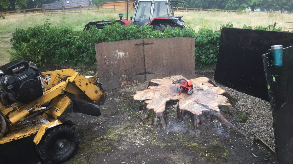 cms-tree-services-grinding-out-large-chestnut-bracewell