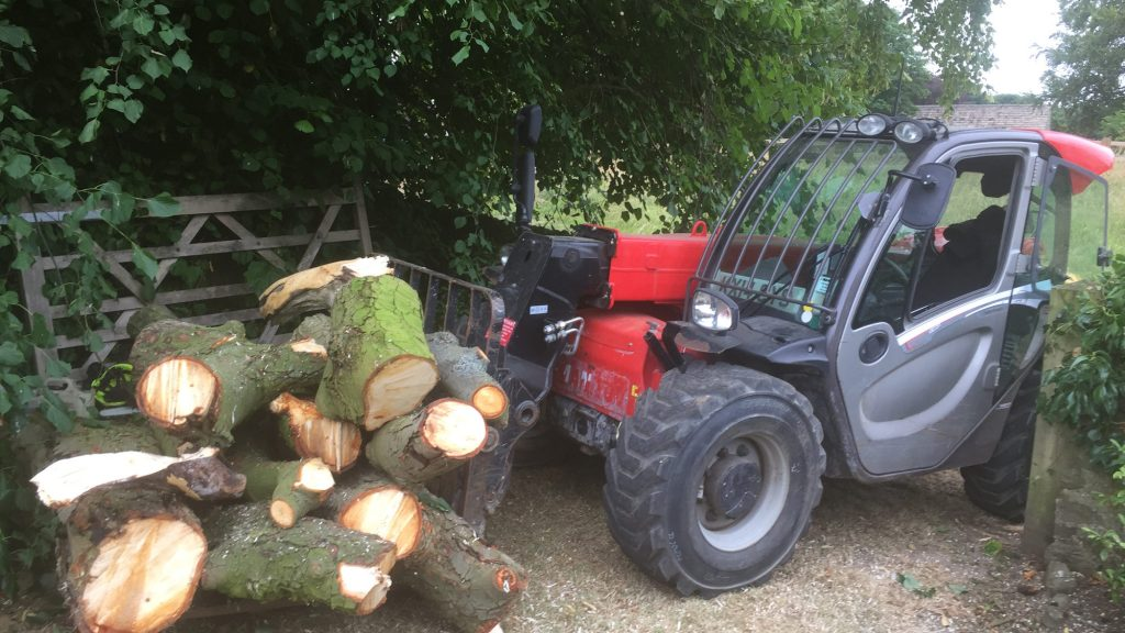 cms-tree-services-horse-chestnut-branches-trunks