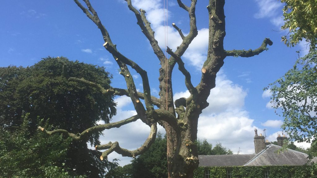 cms-tree-services-horse-chestnut-clearing