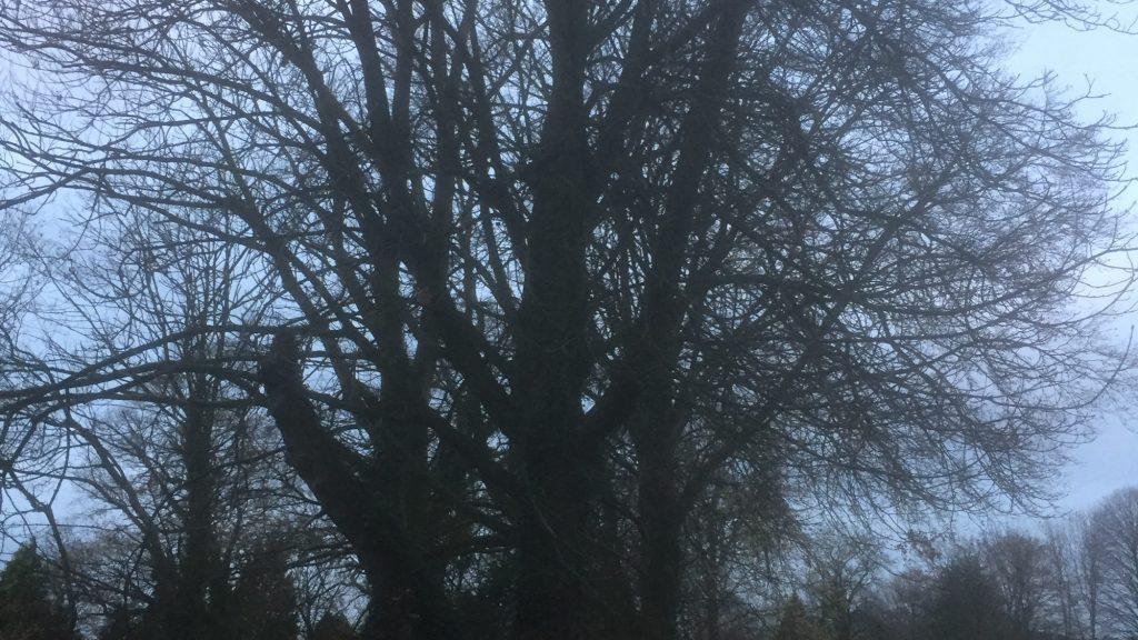 cms-tree-services-horse-chestnut-removal-barrowford