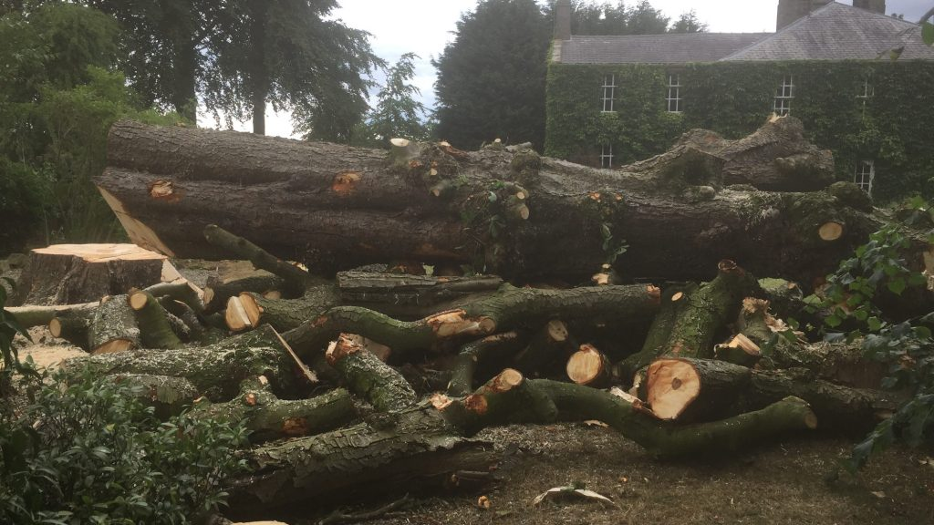 cms-tree-services-horse-chestnut-tree-felled