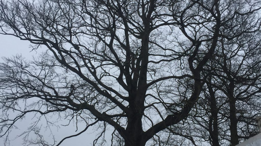 cms-tree-services-large-tree-removal-grindleton